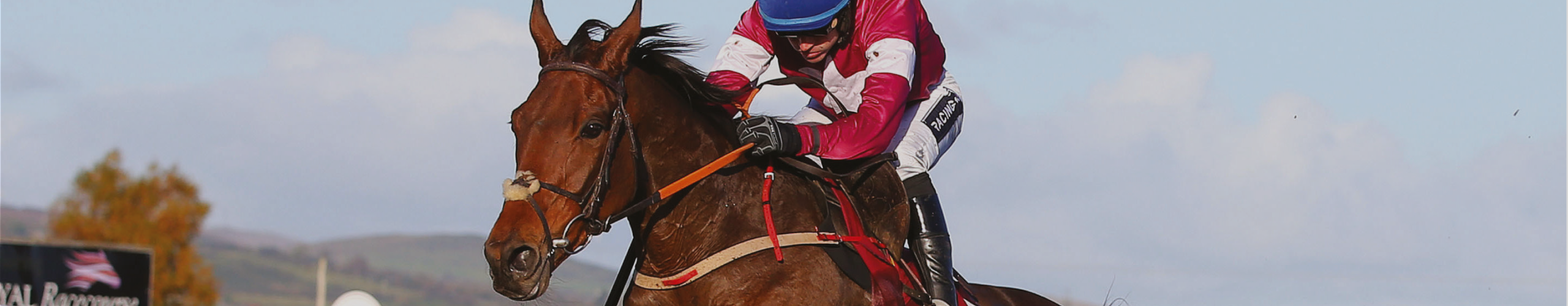 Terms & Conditions » Down Royal Racecourse